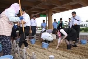 20140828鳥取空港にラッキョウ畑 004
