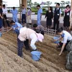 20140828鳥取空港にラッキョウ畑 017